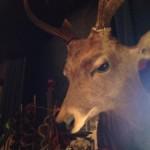 壁掛けインテリアグッズ:紳士のお屋敷に欠かせない?鹿の剥製。