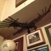 イゴー・エトリッヒが開発した飛行機『タウベ』の模型を飾る