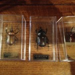 ヴンダーカンマーに欠かせない『昆虫の標本』を入手。※ただしフェイク。