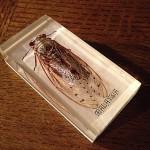 ヴンダーカンマー的部屋づくりに欠かせない『昆虫のアクリル樹脂標本』