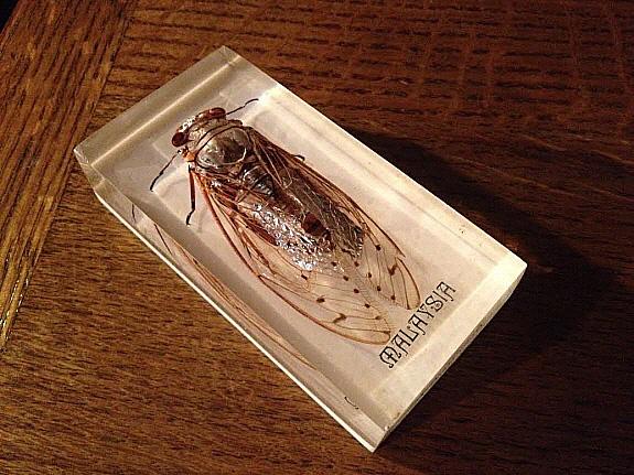 昆虫のアクリル樹脂標本