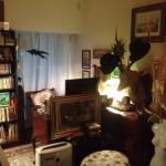 新居の書斎をヴンダーカンマー&英国紳士風に