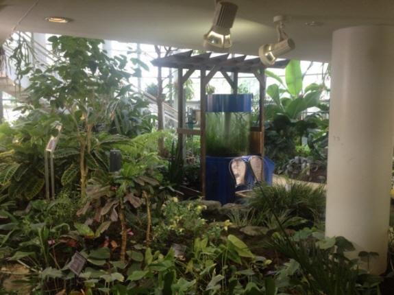 個人的に超癒やしスポット!渋谷区ふれあい植物センター